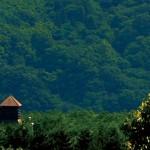 Hakushu Distillery