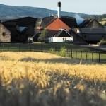 スコッチウイスキーの大麦品種